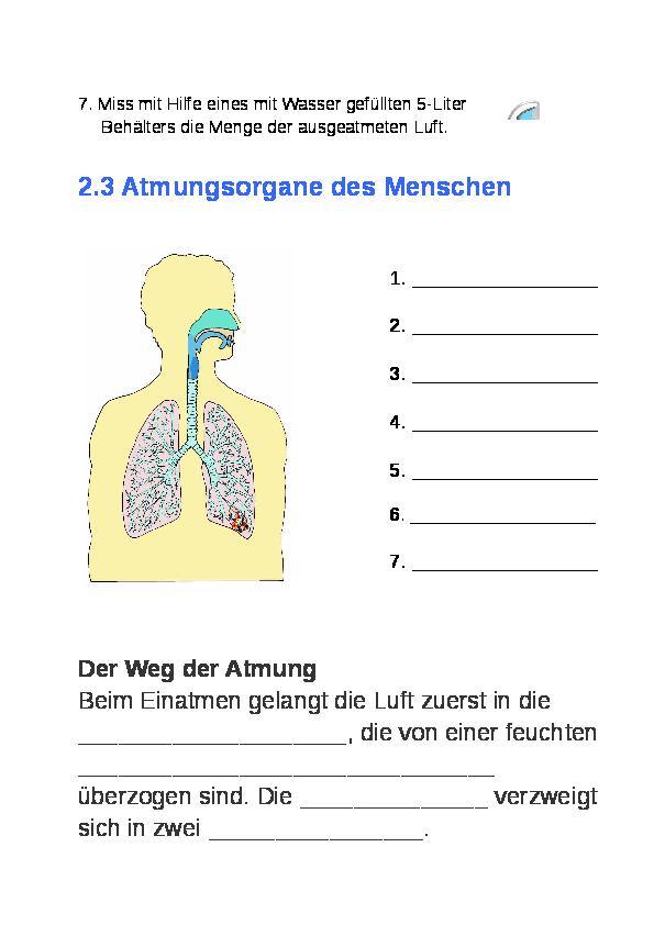 Gemütlich Anatomie Und Physiologie Klasse Website Galerie ...