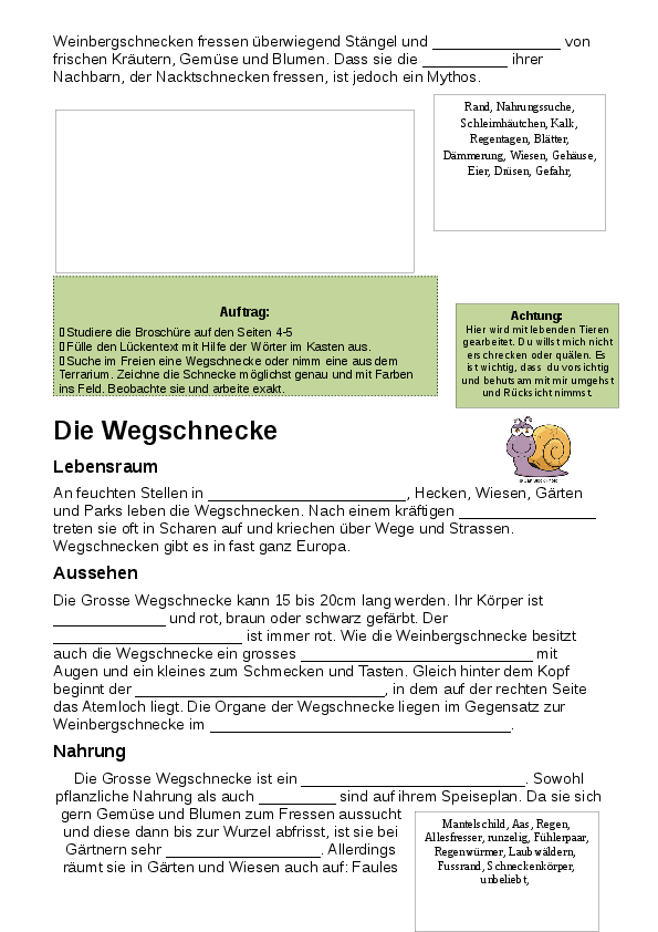 Old Fashioned Arbeitsblatt An Lebenden Und Nicht Lebenden Dinge Für ...