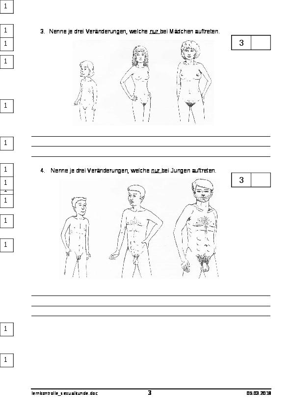 sexualkunde 6 klasse arbeitsblätter