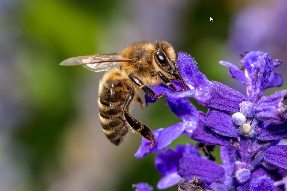 Preview image for LOM object IdeenSet für die Bienen schwärmen