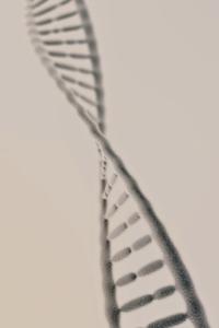Preview image for LOM object Das Haus der Wissenschaft: Was ist die DNA? 20/22