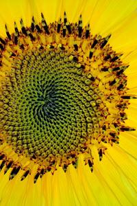 Preview image for LOM object Die geheimnisvolle Welt der Mathematik: Göttliche Zahlen