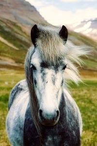 Preview image for LOM object Ich kann das: Urune – Meine Insel, mein Pony