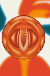 Preview image for LOM object Das Haus der Wissenschaft: Wie entstehen Töne? 7/22