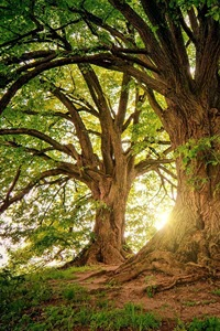 Preview image for LOM object Wälder unserer Erde