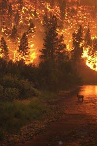 Preview image for LOM object Die grössten Naturkatastrophen: Waldbrände (1/6)