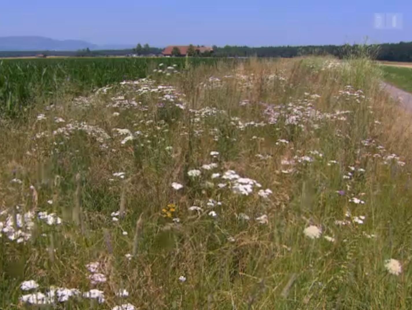 Preview image for LOM object Pestizide – unheimlich wirksam: Wie Natur verschwindet