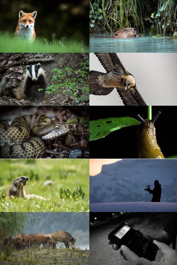 Preview image for LOM object Animals: Ein YouTuber und ein Tierfilmer gehen den Fährten einheimischer Wildtiere nach