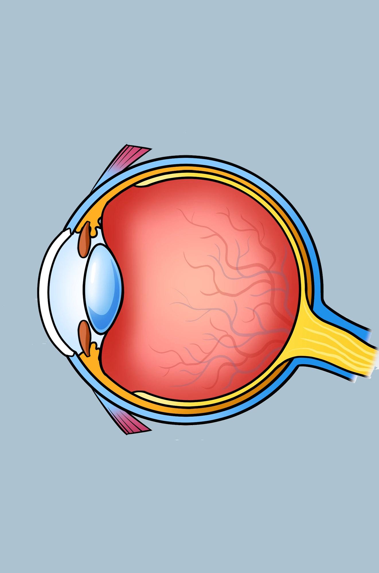 Preview image for LOM object Wie ist dein Auge aufgebaut und wie kannst du damit sehen?
