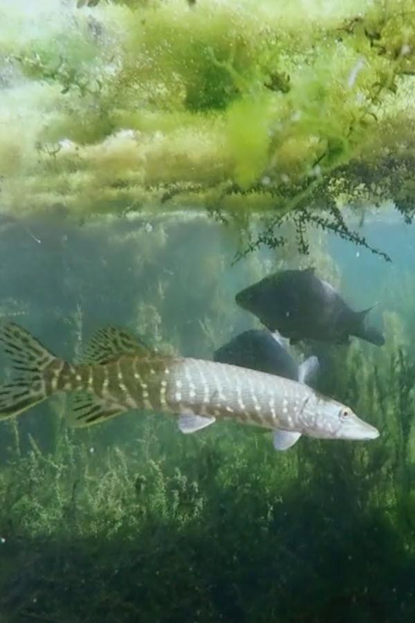 Preview image for LOM object Fische: Unsere Verwandten im Wasser