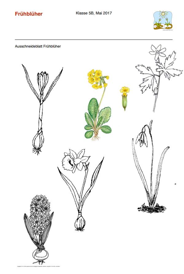 Preview image for LOM object Ausschneideblätter Frühblüher