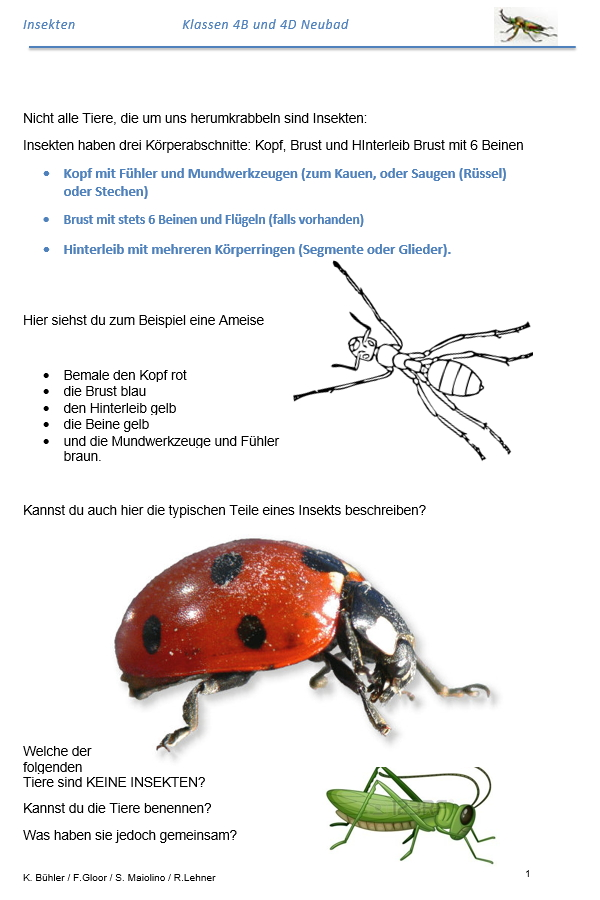 Preview image for LOM object Insekten