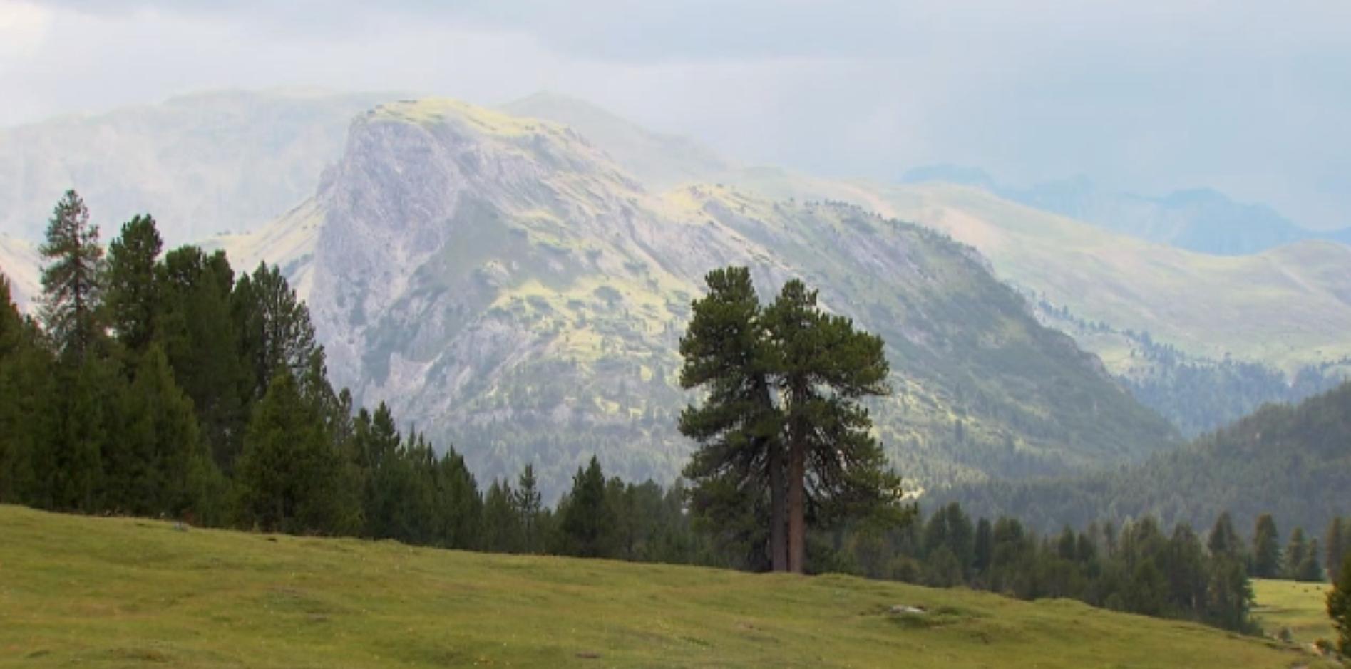 Preview image for LOM object 100 Jahre Schweizerischer Nationalpark: Drei Lebewesen – drei Zeiten (1/6)