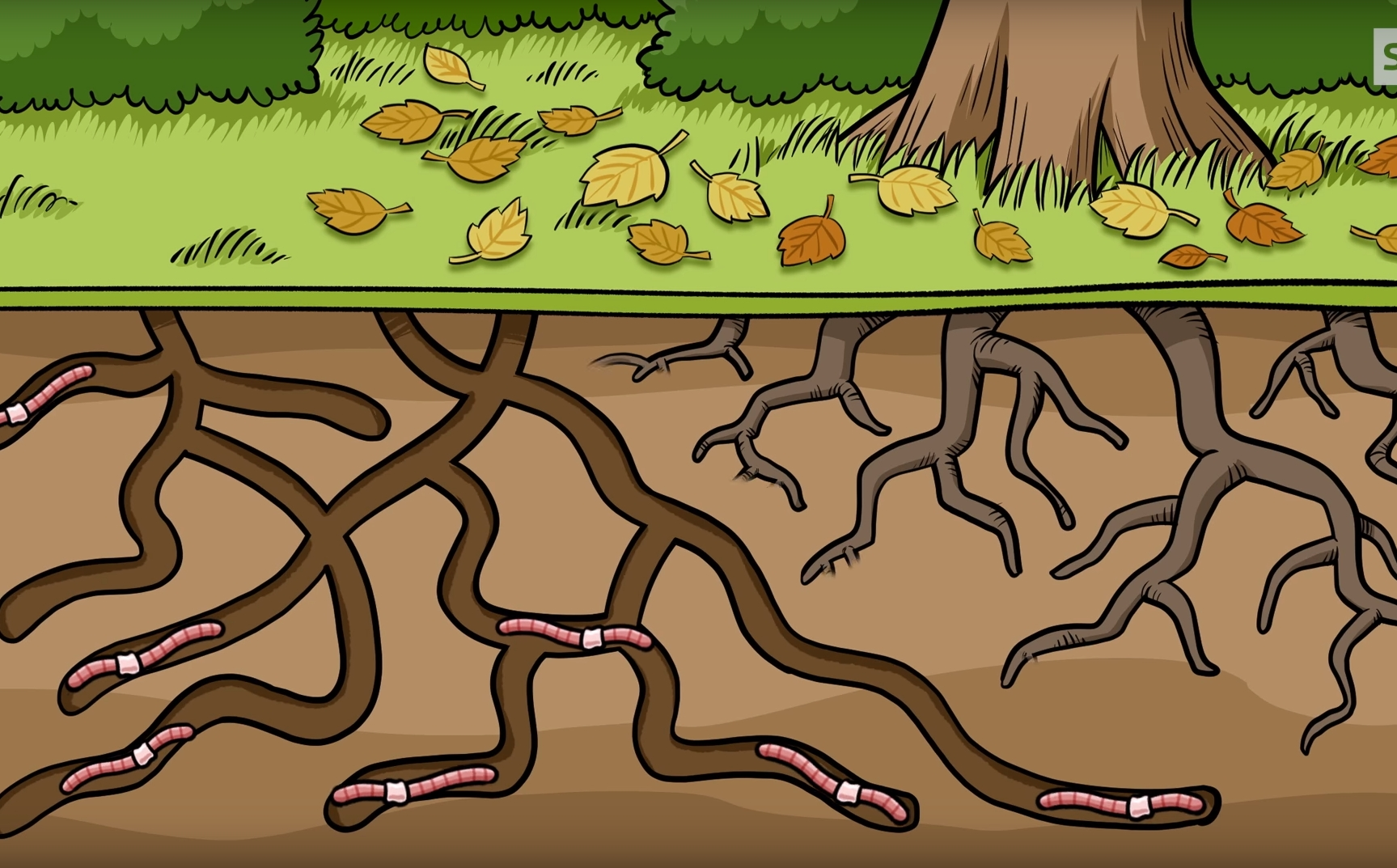 Preview image for LOM object Warum ist der Regenwurm so wichtig?