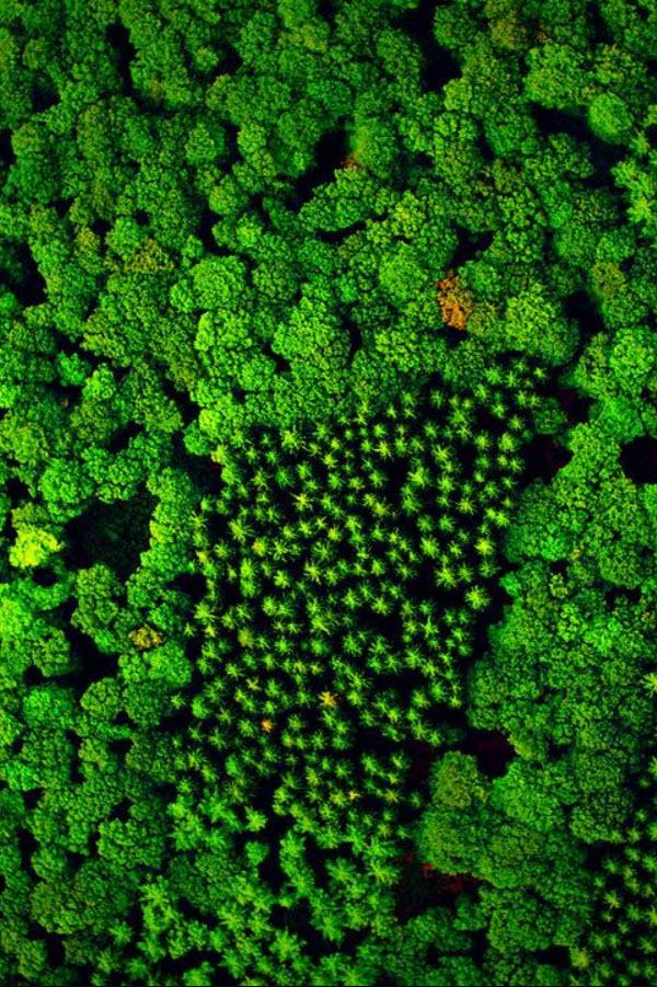 Preview image for LOM object Unsere Wälder: Die Sprache der Bäume (1/3)