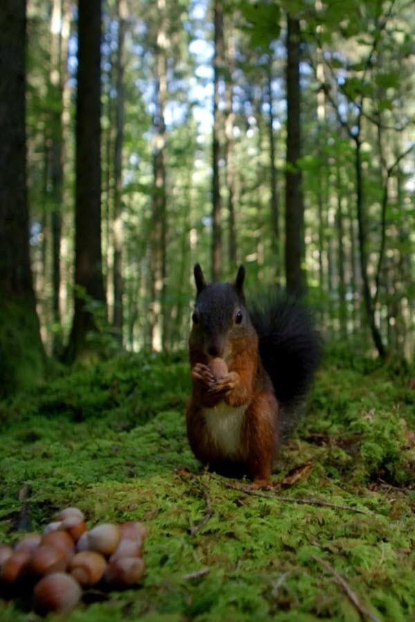 Preview image for LOM object Unsere Wälder: Ein Jahr unter Bäumen (2/3)