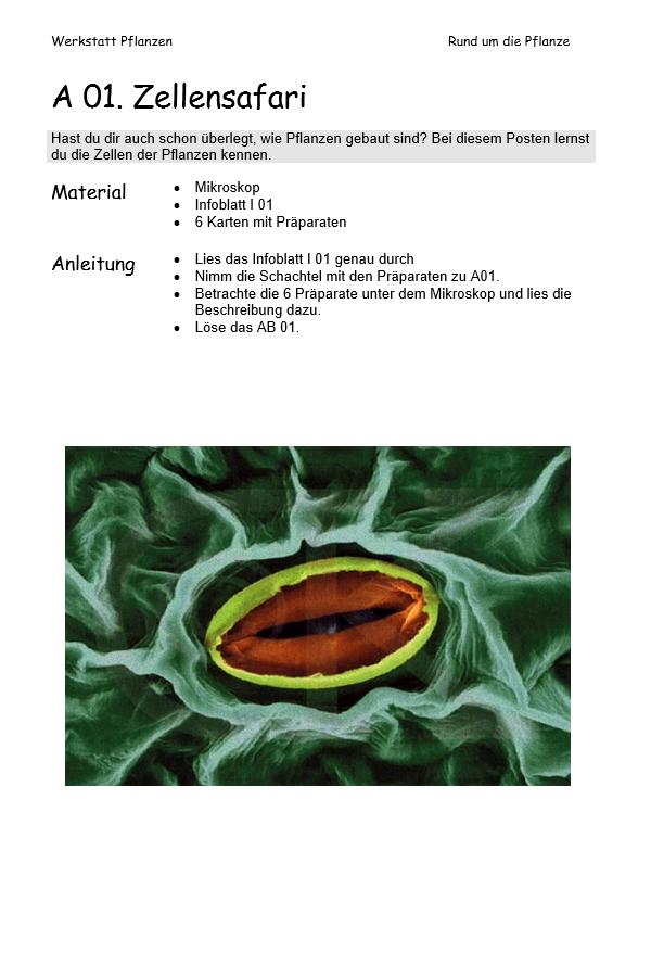Preview image for LOM object Werkstatt Pflanzen